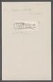 Salpa costata - - Print - Iconographia Zoologica - Special Collections University of Amsterdam - UBAINV0274 092 08 0034.tif