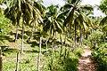 Samaná Province, Dominican Republic - panoramio (90).jpg