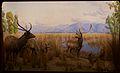 Sambar & Swamp Deer at the American Museum of Natural History.jpg