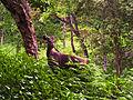 Sambar Deer (3219878353).jpg