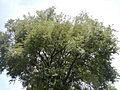 SanFernandoPampangajf2713 18.JPG