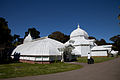 San Francisco Conservatory of Flowers-18.jpg