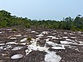 "Sandstone Plateau with ""fire padang"" vegetation (15588490939).jpg"
