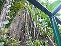 Sankt Lucia - panoramio - georama (27).jpg
