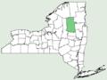 Saxifraga oppositifolia NY-dist-map.png