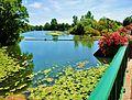 Scey-sur-Saône. La Saône vue du grand pont. 2015-06-26.jpg