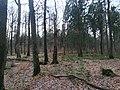 Schierenwald21.jpg