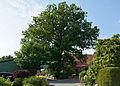 Schleswig-Holstein, Fitzbek, Naturdenkmal NIK 6931.JPG