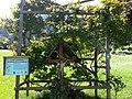 Schneeglöckchenbaum Inzing.jpg