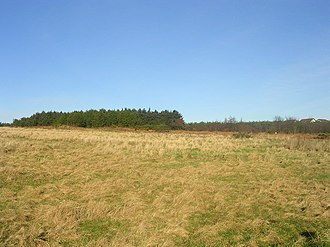 Scotstown Moor - View across the moor