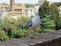 Seagull (26364658582).jpg