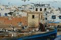 Seagulls, Essaouira (3539734867).png