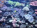Seattle Aquarium, exhibit in 2012.JPG