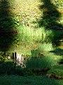 Sedge and pond reflections. (c8271fb2c7c942cdb59ad423e70d84c0).JPG