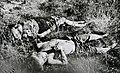 Seitajärven verilöylyn nuoria uhreja.jpg