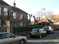 Severely pruned trees in North Street - geograph.org.uk - 1203653.jpg