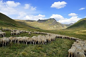 Sheep on the pastures, Shar Mountain.JPG