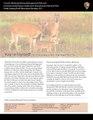 Shen CWD Newsletter 02 28 13 v31.pdf