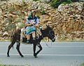 Shepherd girl on a donkey in Greece.jpg
