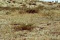 Shkorpilovci magareshki plaj,1.jpg
