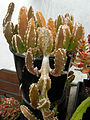 Shoreline CC hothouse succulents 02.jpg