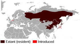 Siberian Chipmunk Tamias sibiricus distribution map.png