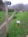 Signpost in Cerne Abbas burial ground - geograph.org.uk - 300440.jpg