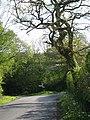 Signpost near Higher Halstock Leigh - geograph.org.uk - 1284190.jpg