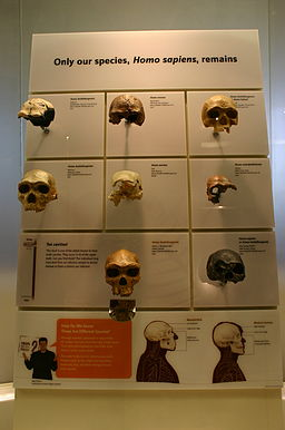 Skulls of our Ancestors 3