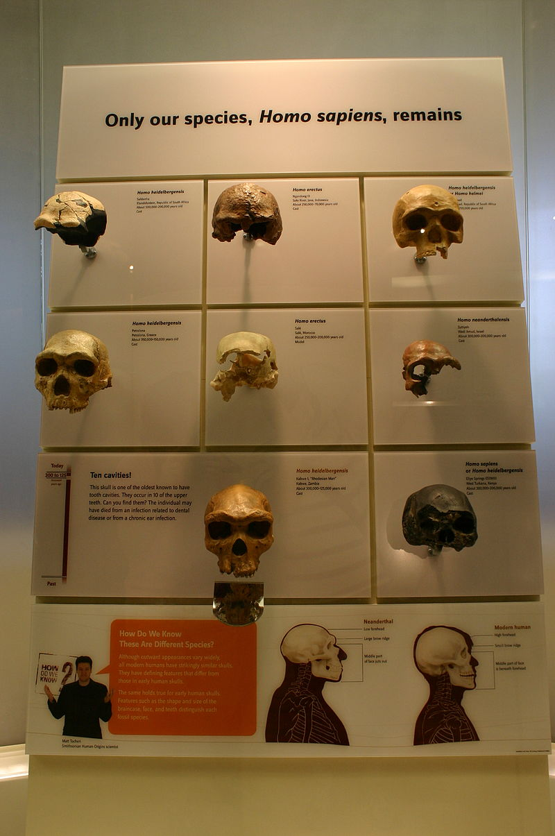 Skulls of our Ancestors 3.jpg