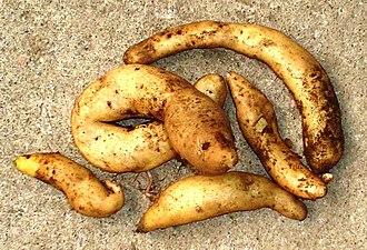 Potatoes of Chiloé - Image: Solanum tuberosum michuñe blanca