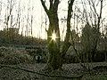 Soleil dans un arbre (2177811783).jpg