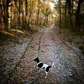 Spaziergang im Winter durch den Augustdorfer Wald mit Merlin.jpg