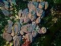 Sponge at Alphard Banks P4100579.jpg