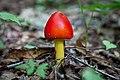 Spring-mushroom-forest-floor-macro - West Virginia - ForestWander.jpg