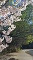 Spring Blossoms in Walnut Creek California.jpg