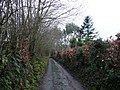 Spycott Lane - geograph.org.uk - 665075.jpg