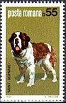 St-Bernard-Canis-lupus-familiaris Romania 1981.jpg