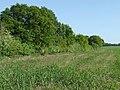 Staffordshire farm land near Market Drayton (Shropshire) - geograph.org.uk - 1605520.jpg