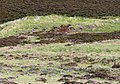 Stag Target - geograph.org.uk - 203918.jpg