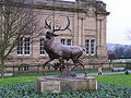 Stag by Cartwright Hall.JPG