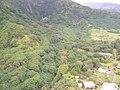 Starr-050405-5929-Pueraria montana var lobata-habit-Wailua-Maui (24116243793).jpg
