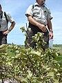 Starr 080605-6692 Solanum nelsonii.jpg