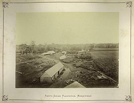 StateLibQld 2 239558 Raff's Sugar Plantation, Morayfield, Queensland, 1874.jpg