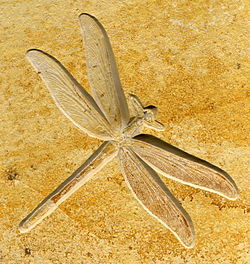 Hva er relativ datering av fossiler dating hendelser Perth WA