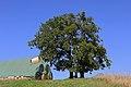 Stieleichen bei Ludweis 01 2015-08 NDM WT-069.jpg