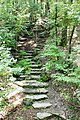 Stone steps in the woods.JPG
