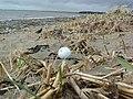 Stranger on the shore - geograph.org.uk - 351404.jpg