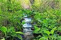 Streamside Hike (6) (14032038680).jpg
