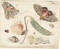 Studies of Fruits, Insects and Shells MET DP805333.jpg